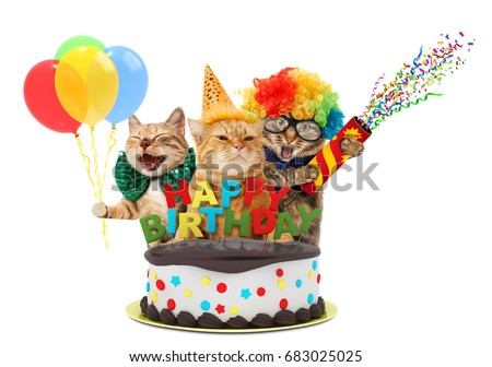 Funny Cats With Happy Birthday Cake They Are Wearing A Party Hat Isolated On