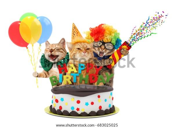 Funny Cats Happy Birthday Cake They Stockfoto Jetzt Bearbeiten