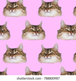 Funny cat's  heads on pink background. Fashion art collage pattern.