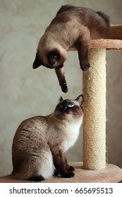 Funny cats play each other