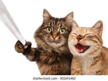 Funny cats - Self picture. Couple of cat taking a selfie together with smartphone camera.