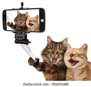 Забавные кошки - Самовывоз. Селфи в руке. Пара кота, взяв селфи вместе с камерой смартфона