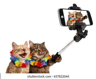 Funny cats are taking a selfie with smartphone camera. They are going on vacation. Subject of travel.