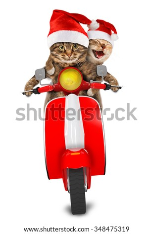 addae14918df6 funny cats are wearing christmas hats and driving a moped humorous theme