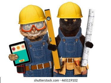 Funny cats are wearing a suit of builder and holding a builder's level and project plan. Craftsman on the white background.