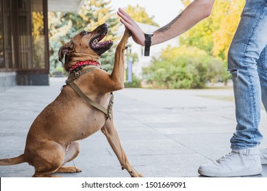 """Funny and cheerful dog doing """"high five"""" with the owner. Dog care, upbringing and bonding:  happy mixed breed dog on a walk doing a shake command"""