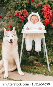 Funny child in teddy bear costume siiting in hair chair with beautiful pet with smiling muzzle. Husky dog and little boy friendship.