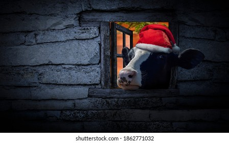 Funny Christmas card with a cute cow wearing a Santa Claus hat looking through the window of a vintage house with copy space