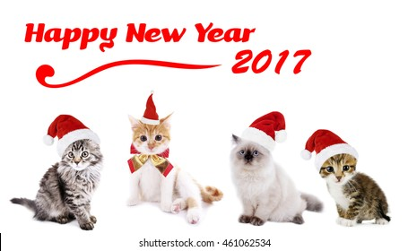 funny christmas cats happy news year 2017