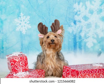 Funny Christmas dog image. Yorkshire terrier with a snowy xmas background.