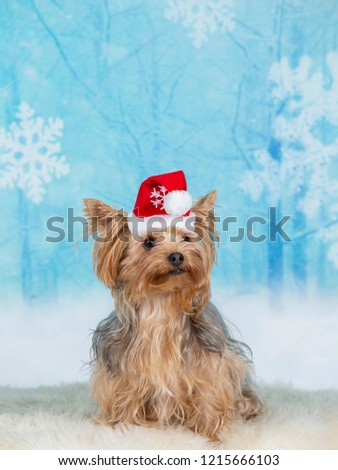 funny christmas dog image yorkshire terrier with a snowy xmas background