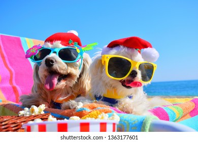 funny christmas dog puppus with sunglasses in the beach