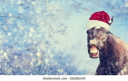 Funny Christmas  horse with Santa hat smiling and looking into camera on winter snow fall background , banner,  toned