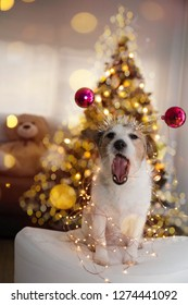 FUNNY CHRISTMAS OR NEW YEAR DOG. JACK RUSSELL PUPPY SMILING WITH OPEN MOUTH, WEARING A PINK DIADAME ON HEAD AND DEFOCUSED CHRISTMAS LIGHTS TREE LIKE BACKGROUND.