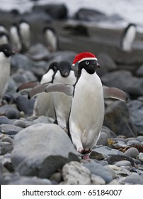 Funny Christmas Penguins wearing Red Santa Clause hat.