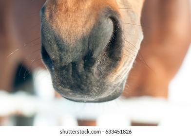 Funny closeup portrait of horse