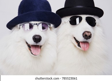 funny couple of dogs in hats and sunglasses. Cute white doggy family. Symbol of 2018 New Year