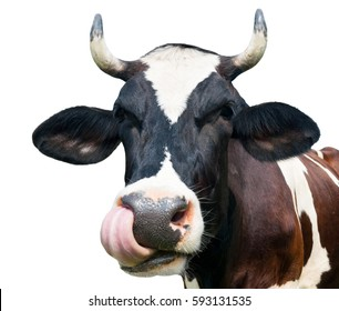 Funny cow, isolated on white background