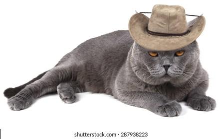 Funny cowboy cat