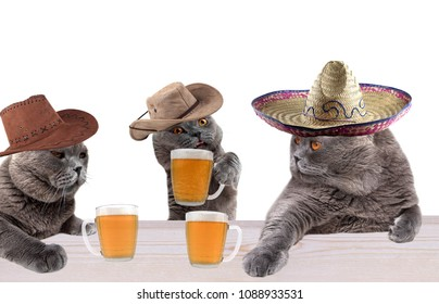 Funny cowboy cats and Mexican cat in saloon