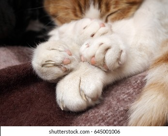 Funny and cute are the cat's paws. Visible heel and claws