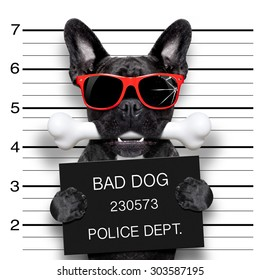 funny cute french bulldog holding a placard while a mugshot is taken, bone in mouth and guilty , wearing red sunglasses