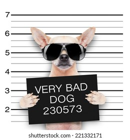 funny cute pug holding a placard while a mugshot is taken