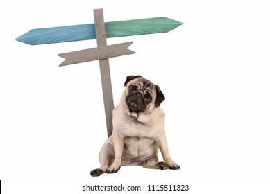 funny cute pug puppy dog sitting down next to blank signpost; with signs pointing left and right, isolated on white background