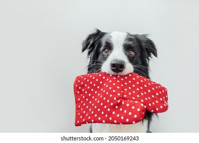 Funny cute puppy dog border collie holding kitchen pot holder, oven mitt in mouth isolated on white background. Chef dog cooking dinner. Homemade food, restaurant menu concept. Cooking process