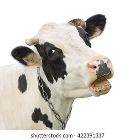 Funny cute talking cow isolated on white/Cow/Cow isolated on white