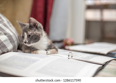 Funny, cute tricolor kitten lay down to rest on a folder with sheets of paper, on a blurred background.