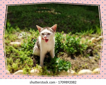 Funny Cute White Kitten Cat, Funny Tongue Out, Beautiful Small Kitten Cat sitting on the green grass.