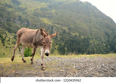 funny dancing donkey in the mountains