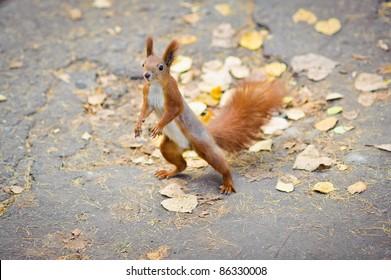 Funny dancing squirrel