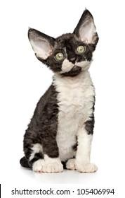 Funny Devon-rex kitten sits on white background