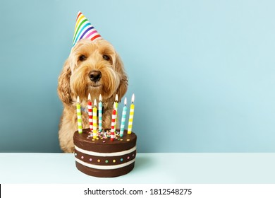 Funny dog with birthday cake and hat