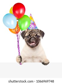 Funny dog in birthday hat holding balloons above white banner. isolated on white background