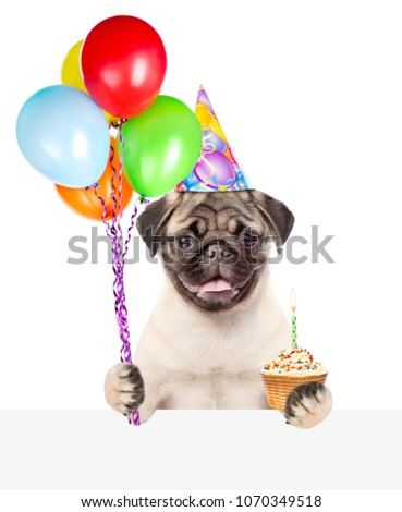 Funny Dog In Birthday Hat Holds Balloons And Capcake With Candle Above White Banner Isolated