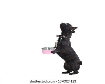 Funny dog with bowl of food in his paws