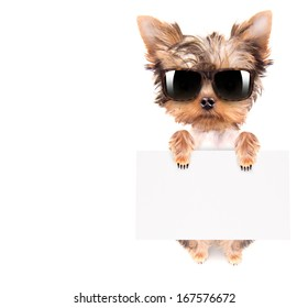 funny dog with bunner isolated on white background