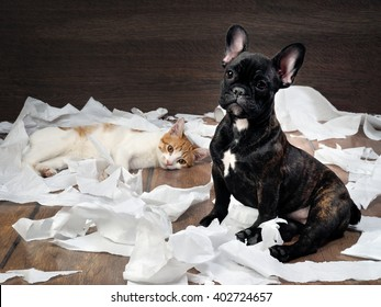Funny dog and cat playing with toilet paper. Dog French Bulldog puppy, black color. Background wood. Cat - white with red kitty