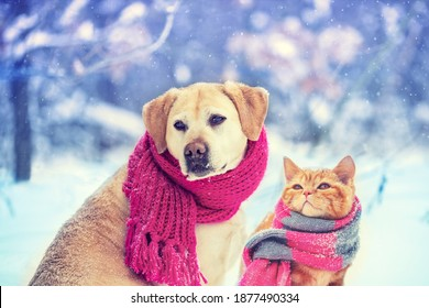 Funny dog and cat wearing knitted scarf, sitting together outdoors on the snow in winter. Christmas scene