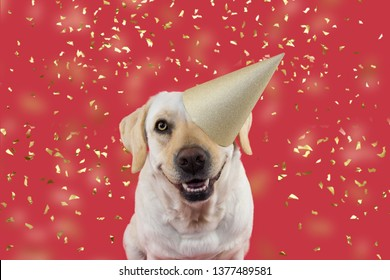 f98e7089e FUNNY DOG CELEBRATING A BIRTHDAY OR NEW YEAR PARTY. WEARING A GLITTER  GOLDEN HAT.