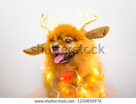 Funny Dog Christmas Decoration Lights Stock Photo Edit Now
