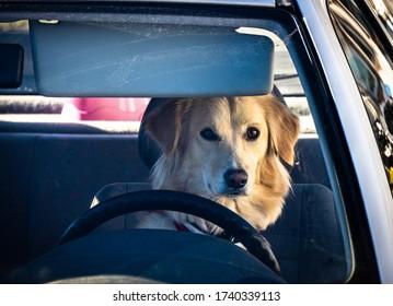 funny dog - close up - photo