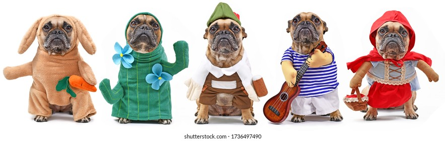Funny dog costume variations with French Bulldog dressed up as bunny, cactus, Bavarian, musician and red riding hood