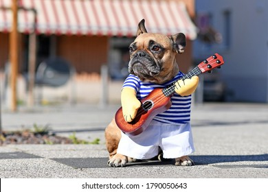 Funny dog cosutume on French Bulldog dressed up as street perfomer musician wearing striped shirt and fake arms holding a toy guitar standing in city street on sunny day