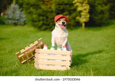 Funny dog delivers fresh dairy products from local farmer