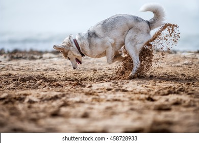 Funny dog digging sand at the beach