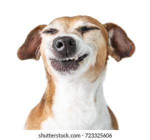 Gracioso disgusto de perro, negación, desacuerdo cara. No te gusta eso. mueca mascota de dientes. Fondo blanco